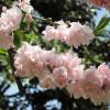 Sboccia la primavera